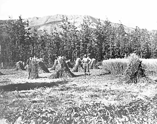 VPL #12465, Leonard Frank, no date, men in field at harvest time in Peace River area