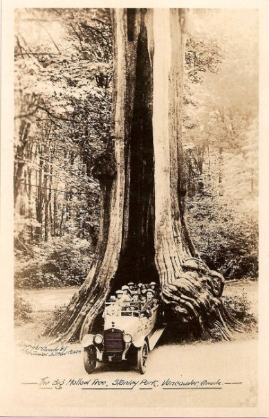 Stanley Park's Hollow Tree Postcard, Courtesy: SaveTheHollowTree.com